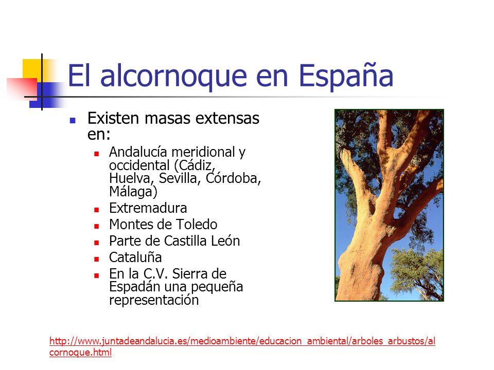 El alcornoque en España