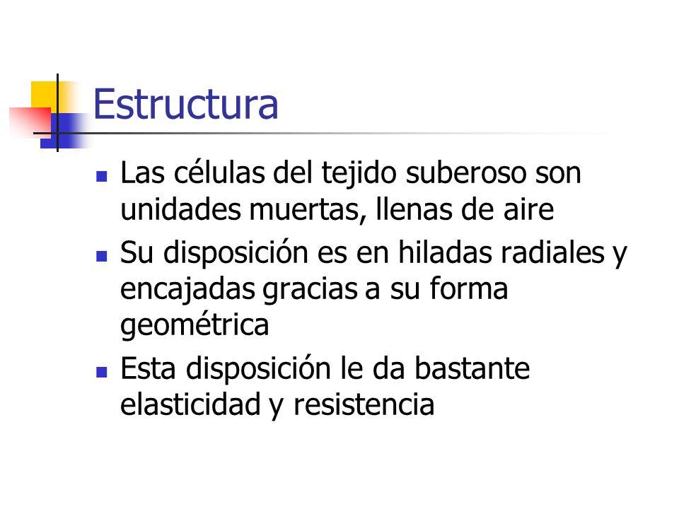 EstructuraLas células del tejido suberoso son unidades muertas, llenas de aire.