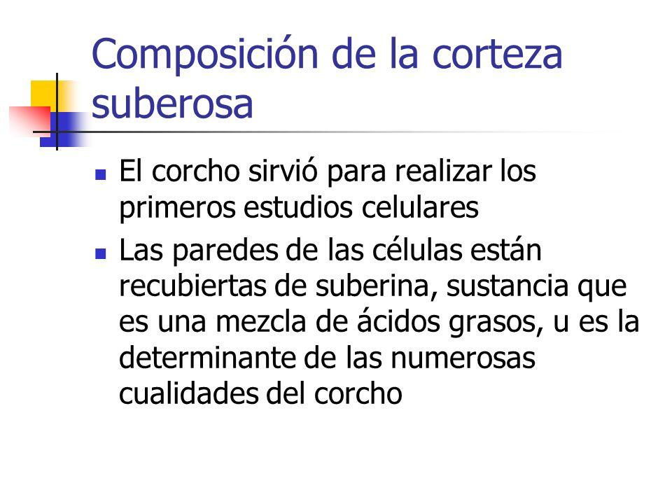 Composición de la corteza suberosa