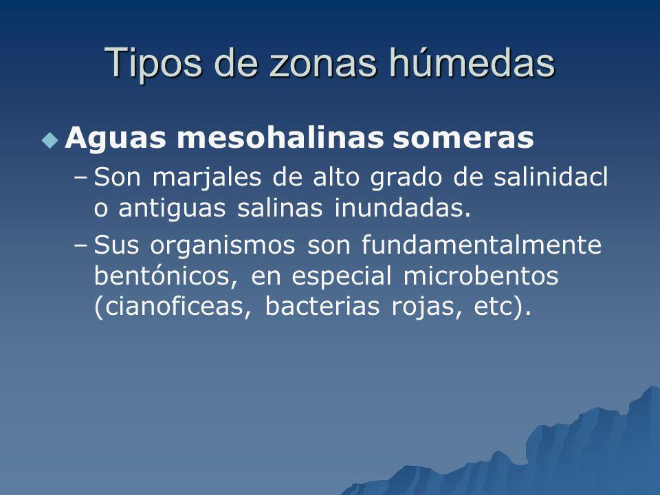 Tipos de zonas húmedas Aguas mesohalinas someras