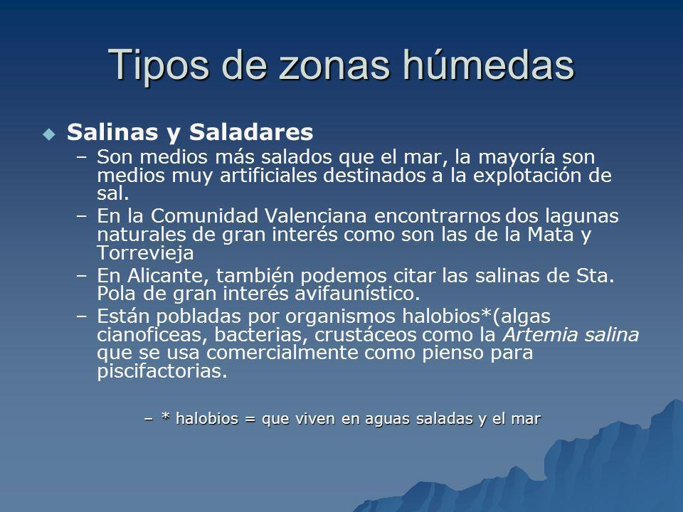 Tipos de zonas húmedas Salinas y Saladares