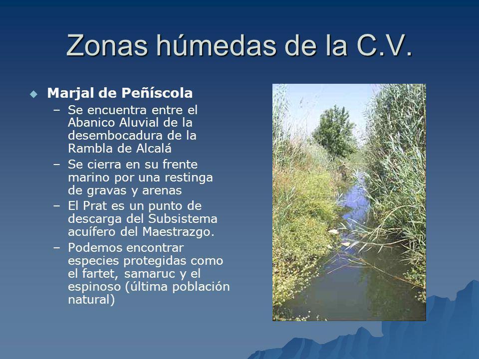 Zonas húmedas de la C.V. Marjal de Peñíscola