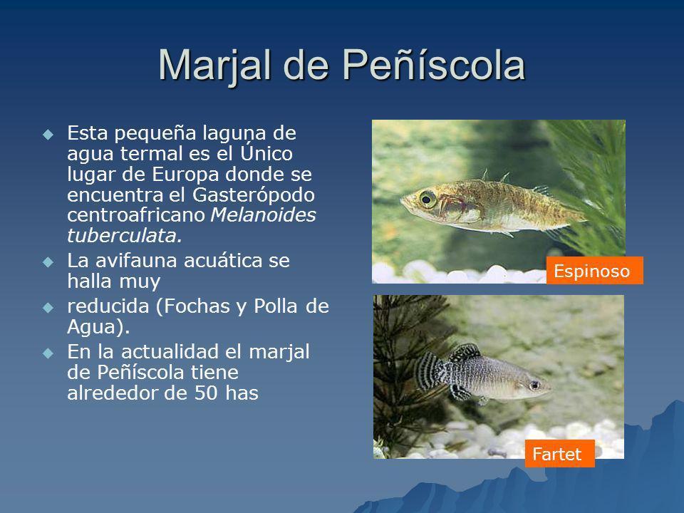 Marjal de Peñíscola