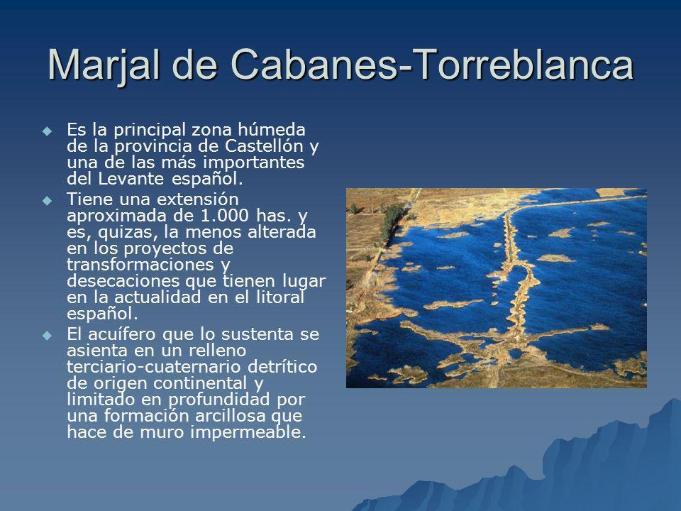 Marjal de Cabanes-Torreblanca