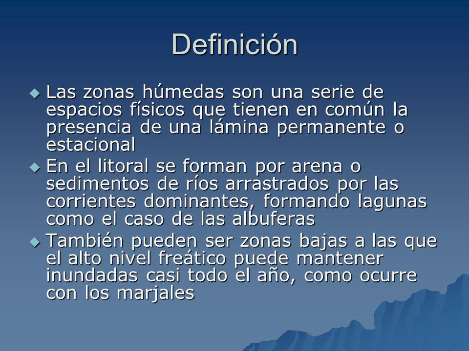 Definición Las zonas húmedas son una serie de espacios físicos que tienen en común la presencia de una lámina permanente o estacional.