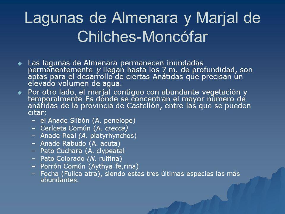 Lagunas de Almenara y Marjal de Chilches-Moncófar