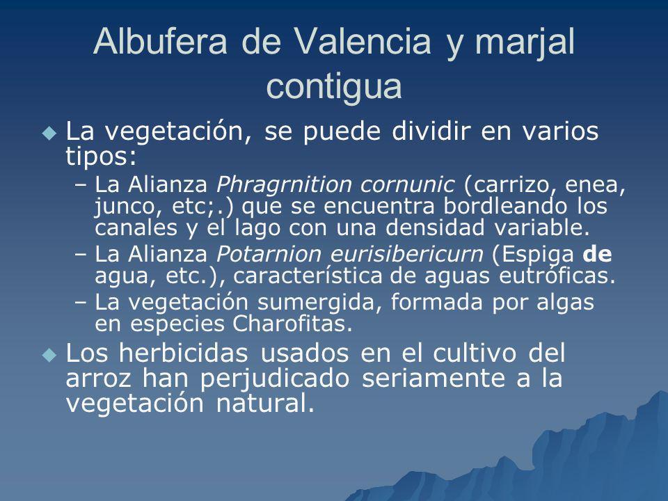Albufera de Valencia y marjal contigua