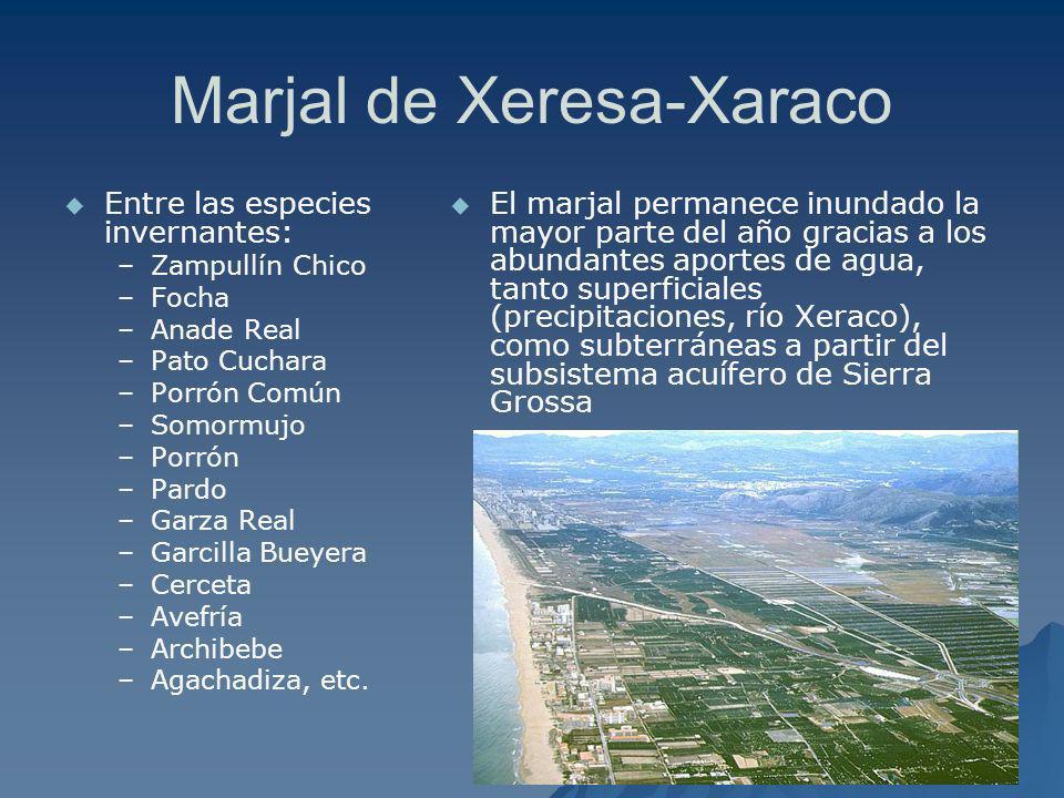 Marjal de Xeresa-Xaraco