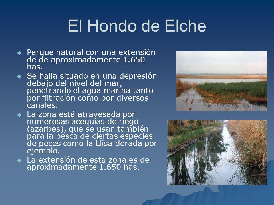 El Hondo de Elche Parque natural con una extensión de de aproximadamente 1.650 has.