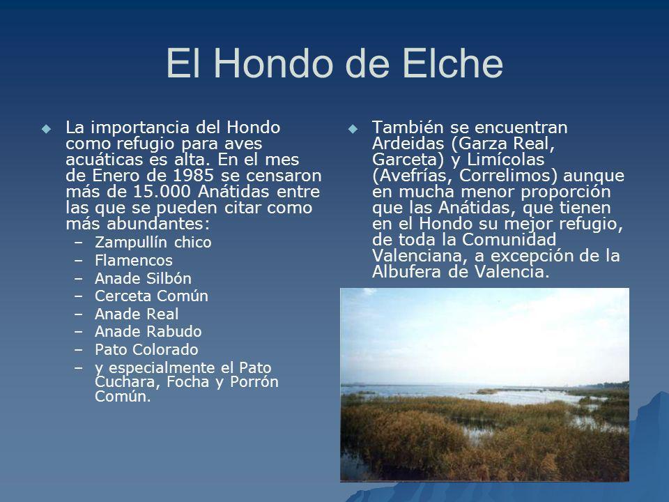 El Hondo de Elche
