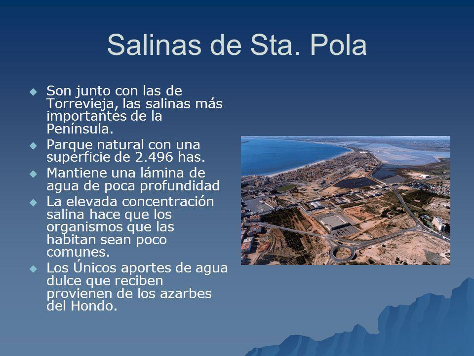 Salinas de Sta. Pola Son junto con las de Torrevieja, las salinas más importantes de la Península. Parque natural con una superficie de 2.496 has.
