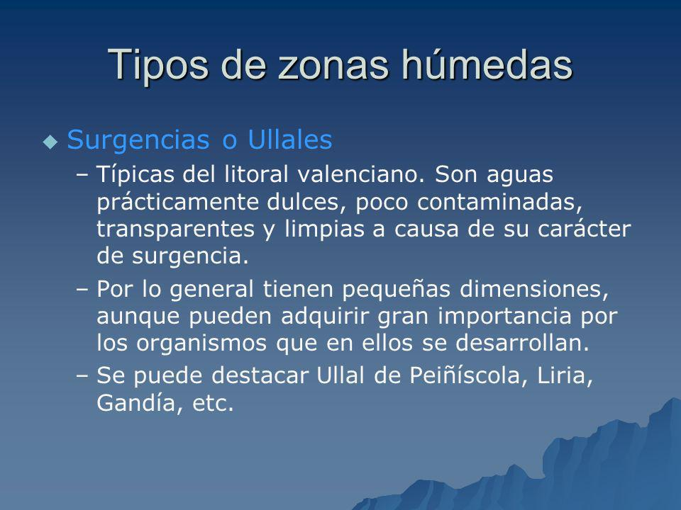 Tipos de zonas húmedas Surgencias o Ullales