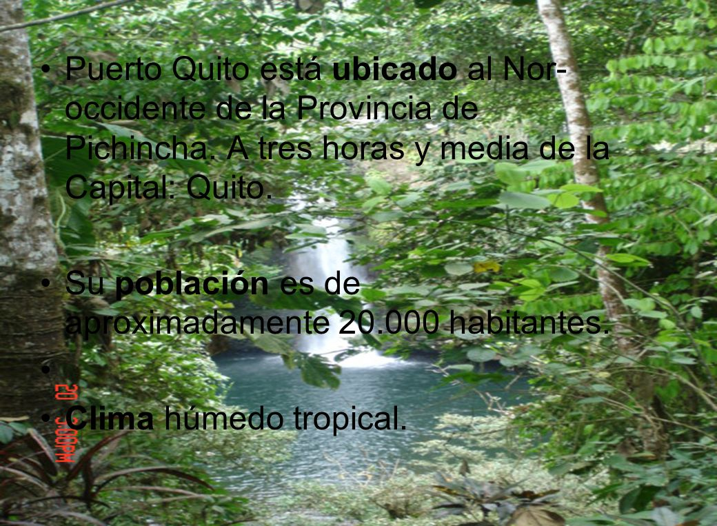Puerto Quito está ubicado al Nor-occidente de la Provincia de Pichincha. A tres horas y media de la Capital: Quito.