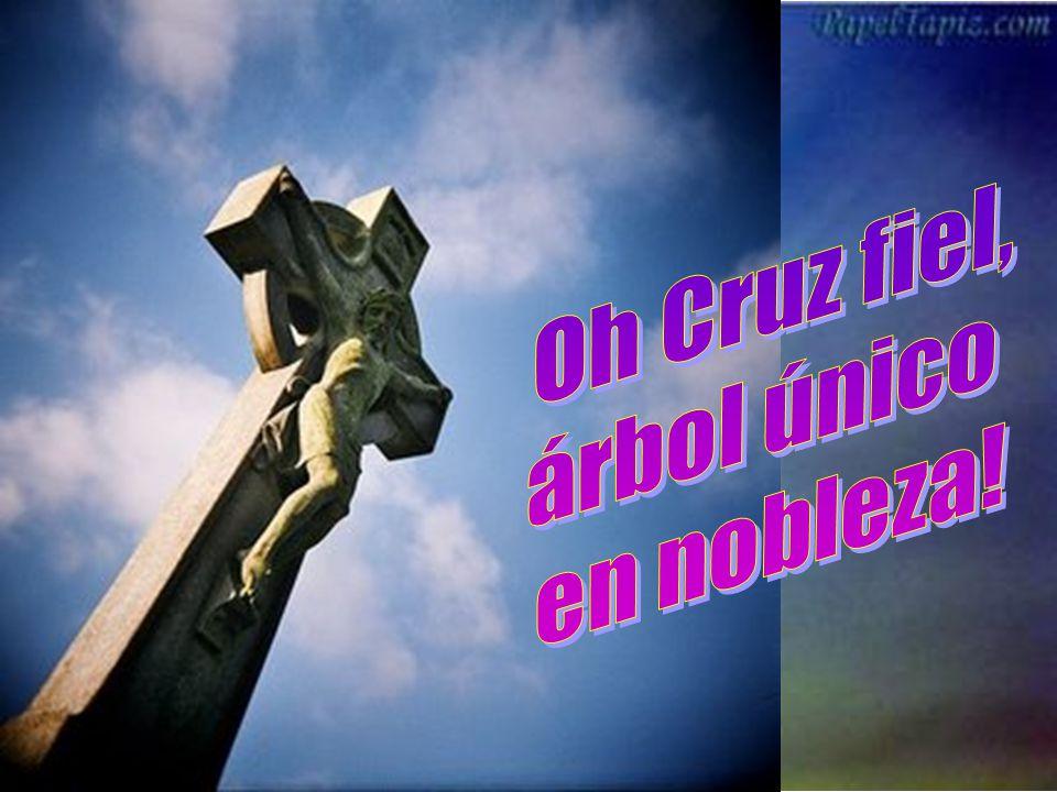 Oh Cruz fiel, árbol único en nobleza!