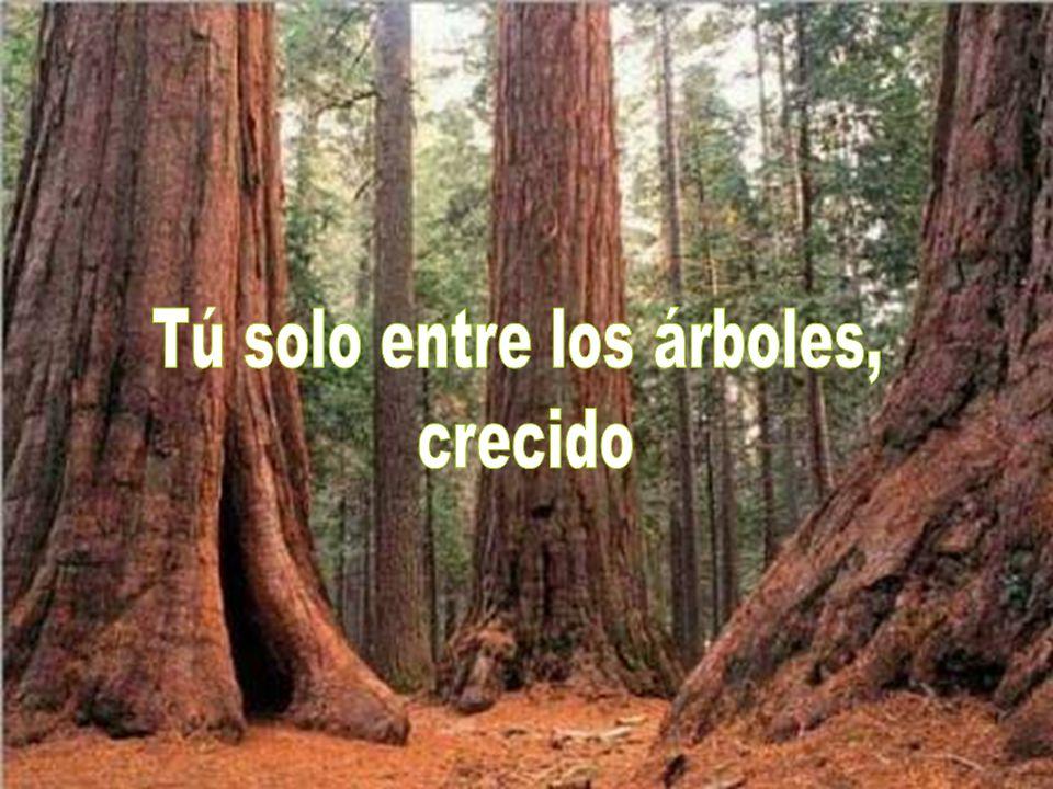 Tú solo entre los árboles,
