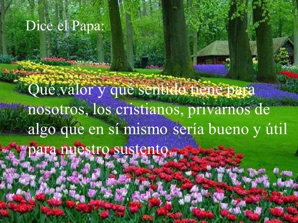 Dice el Papa: