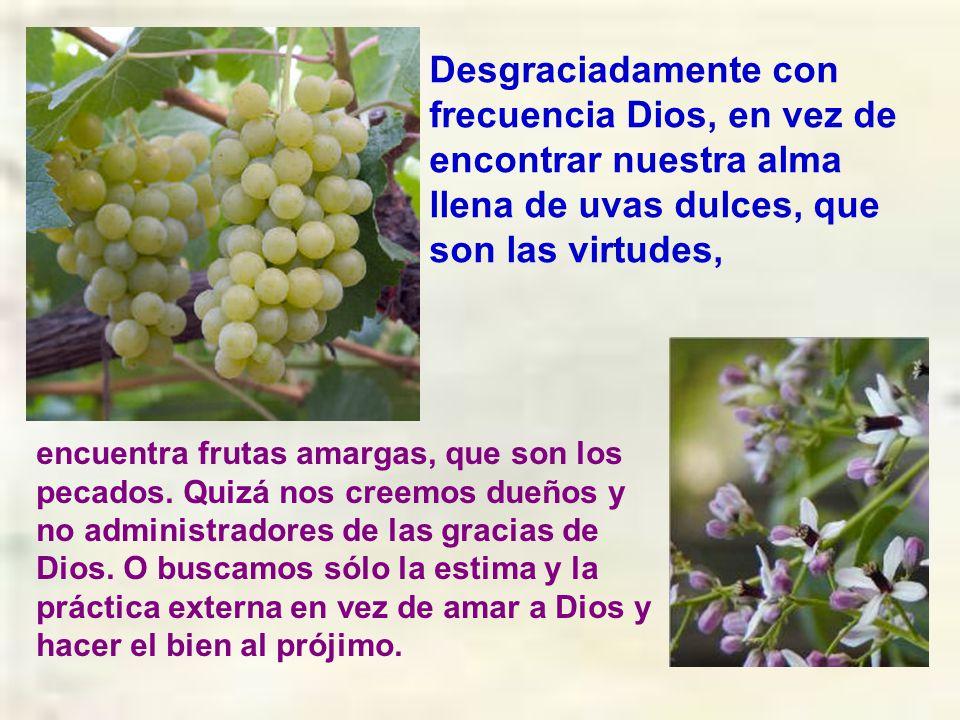 Desgraciadamente con frecuencia Dios, en vez de encontrar nuestra alma llena de uvas dulces, que son las virtudes,