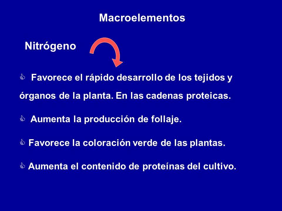 Macroelementos Nitrógeno