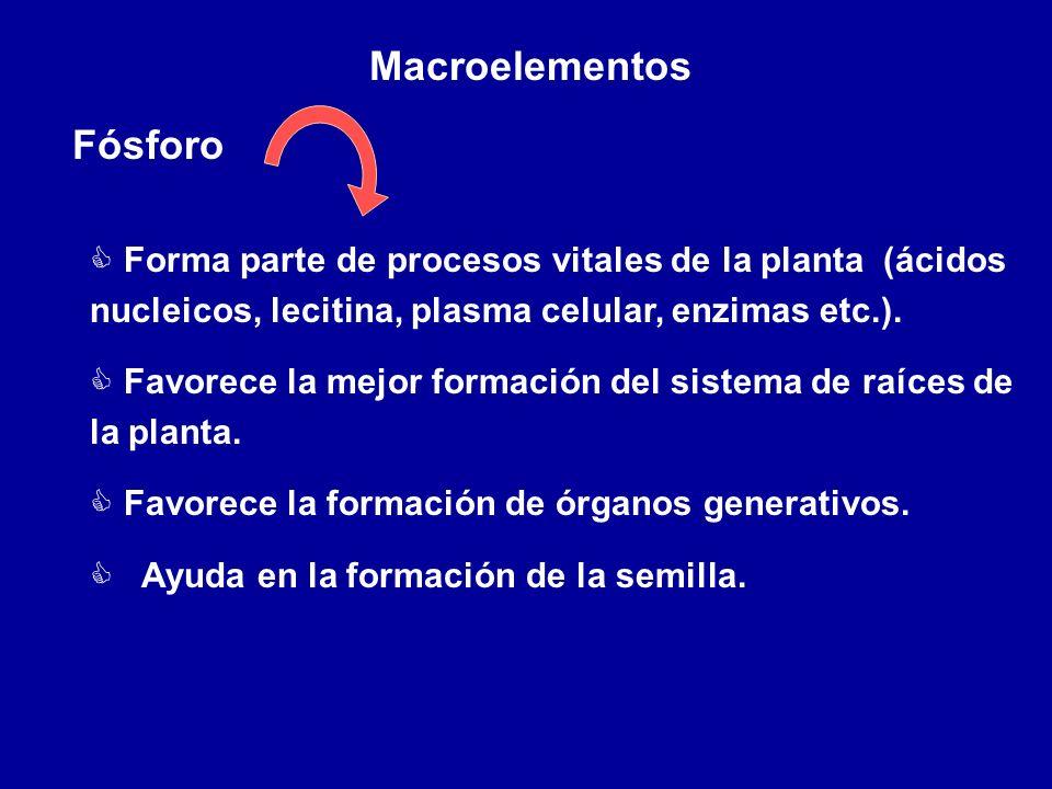 Macroelementos Fósforo