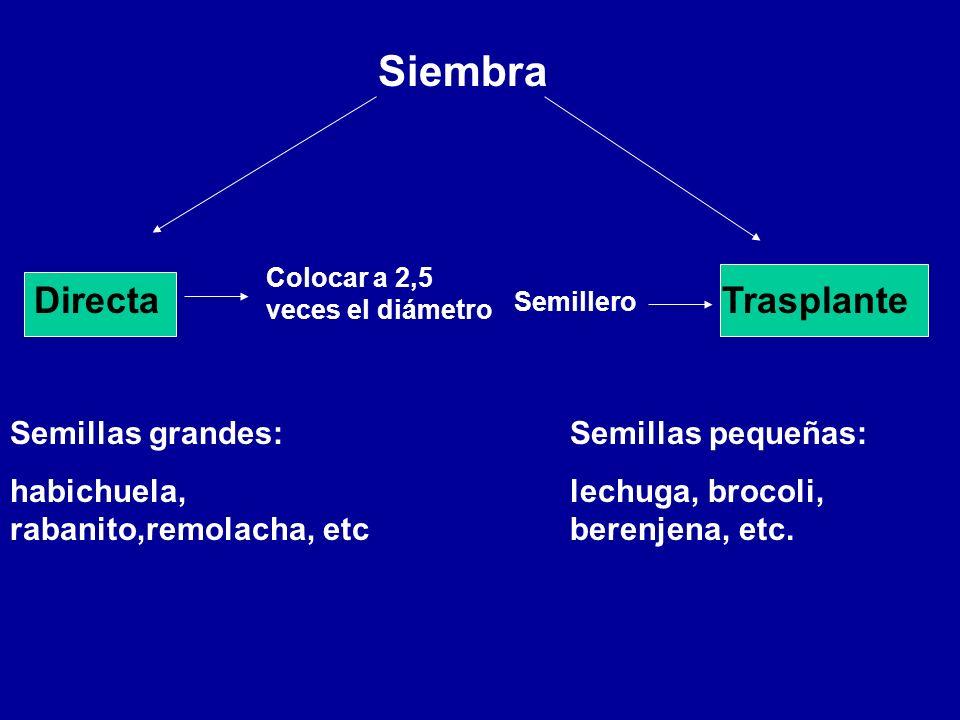 Siembra Directa Trasplante Semillas grandes: