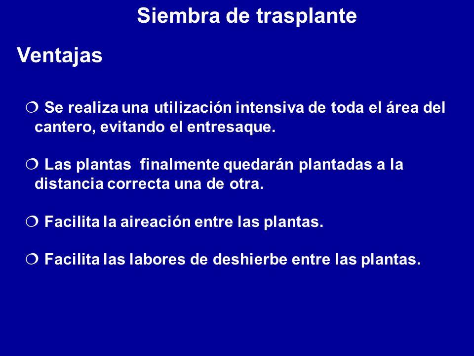 Siembra de trasplante Ventajas