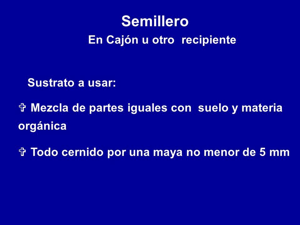 Semillero En Cajón u otro recipiente Sustrato a usar: