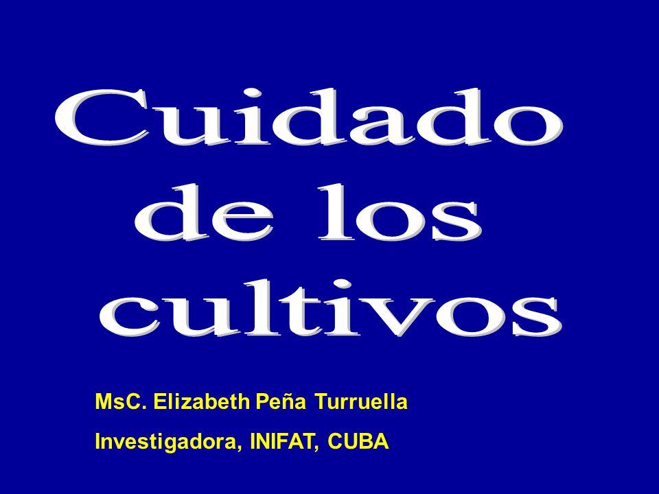 Cuidado de los cultivos MsC. Elizabeth Peña Turruella