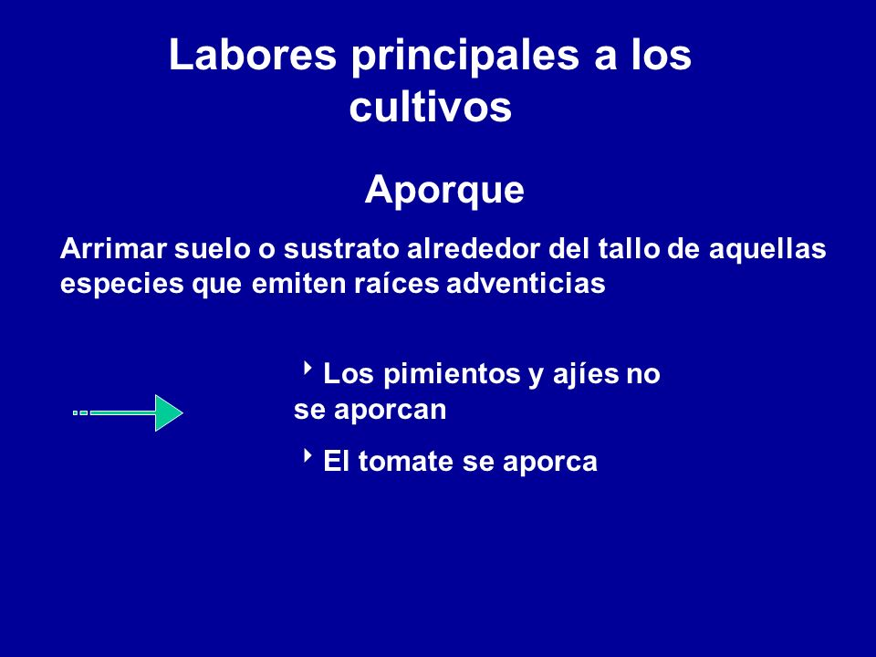 Labores principales a los cultivos