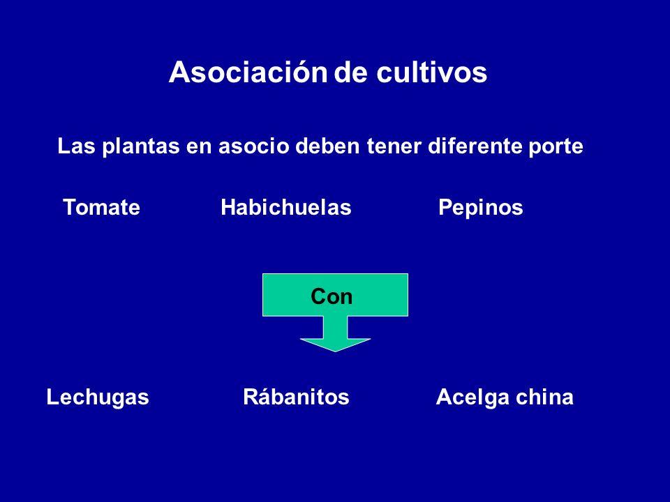 Asociación de cultivos