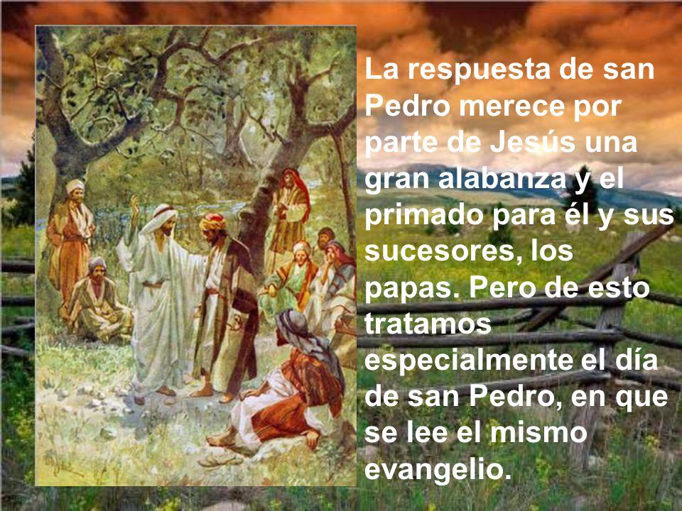 La respuesta de san Pedro merece por parte de Jesús una gran alabanza y el primado para él y sus sucesores, los papas.