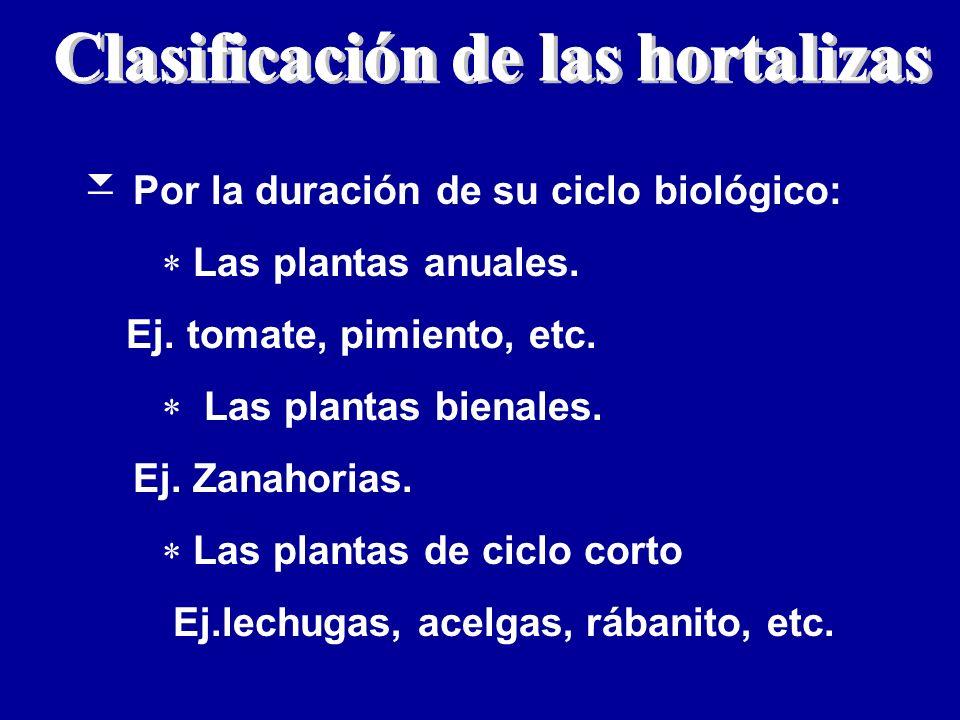 Clasificación de las hortalizas