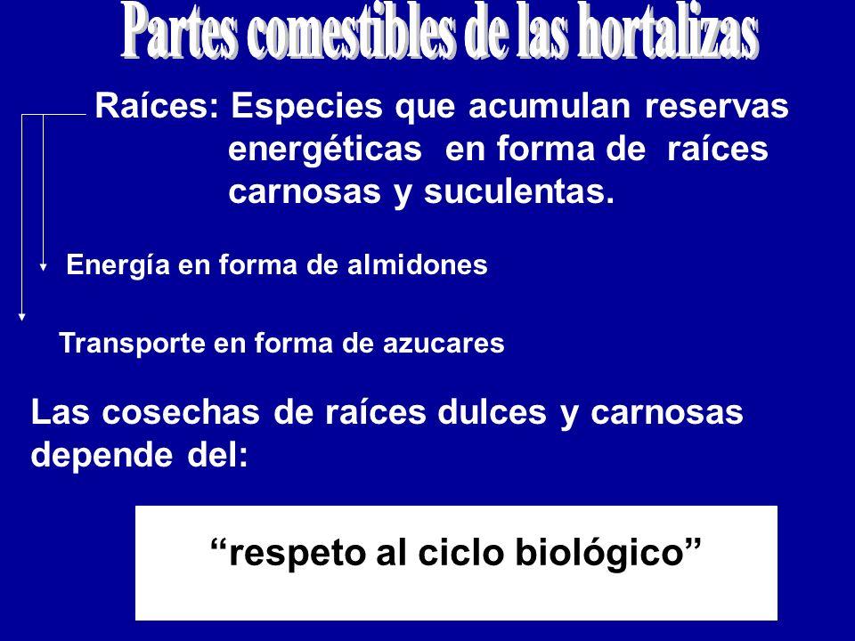 Partes comestibles de las hortalizas respeto al ciclo biológico