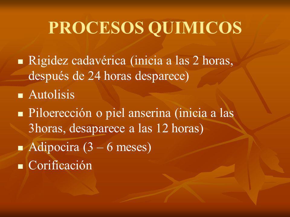 PROCESOS QUIMICOS Rigidez cadavérica (inicia a las 2 horas, después de 24 horas desparece) Autolisis.