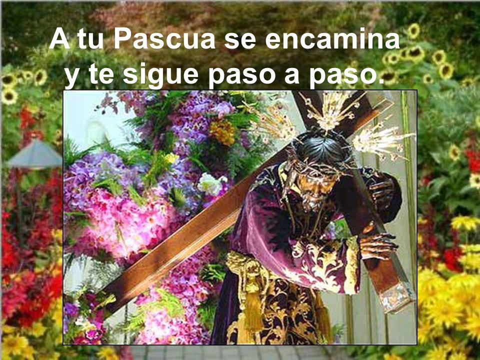 A tu Pascua se encamina y te sigue paso a paso.