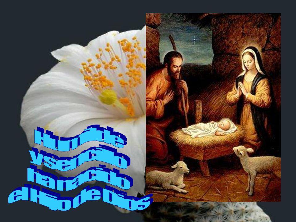 Humilde y sencillo ha nacido el Hijo de Dios
