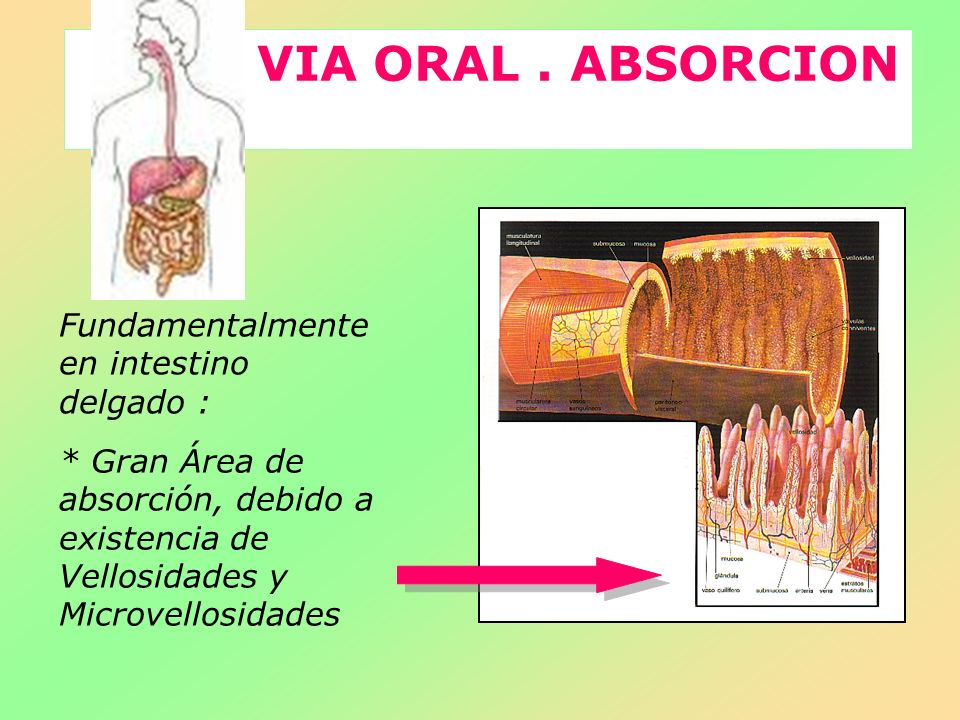 VIA ORAL . ABSORCION Fundamentalmente en intestino delgado :
