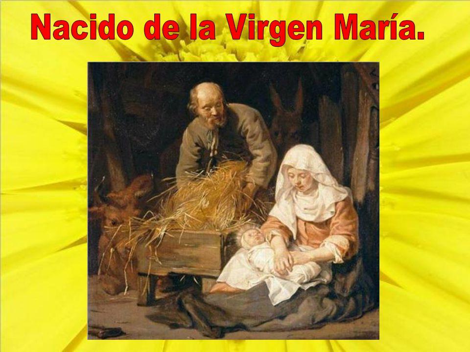 Nacido de la Virgen María.