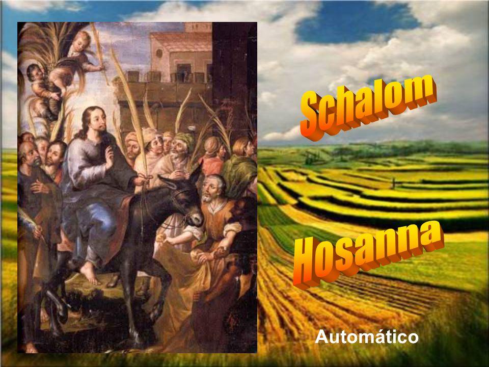 Schalom Hosanna Automático