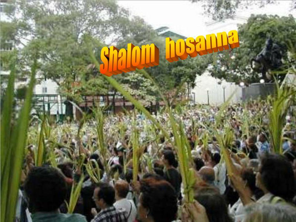 Shalom hosanna