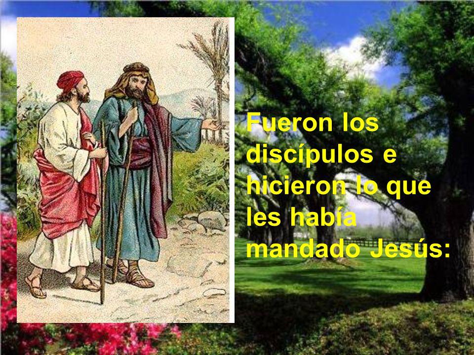Fueron los discípulos e hicieron lo que les había mandado Jesús: