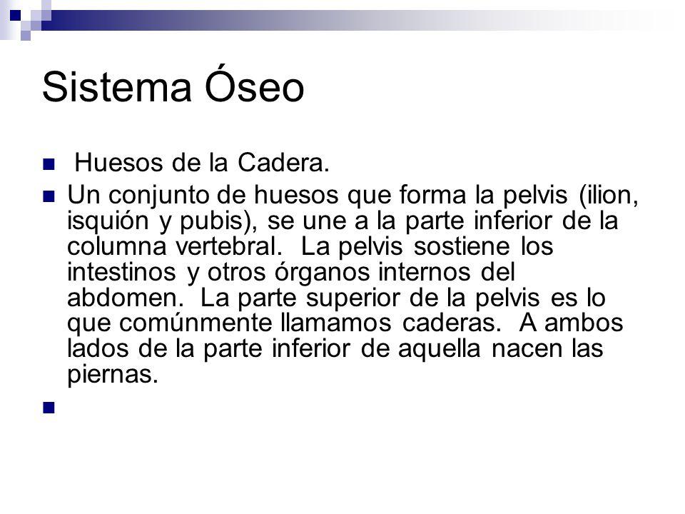 Sistema Óseo Huesos de la Cadera.