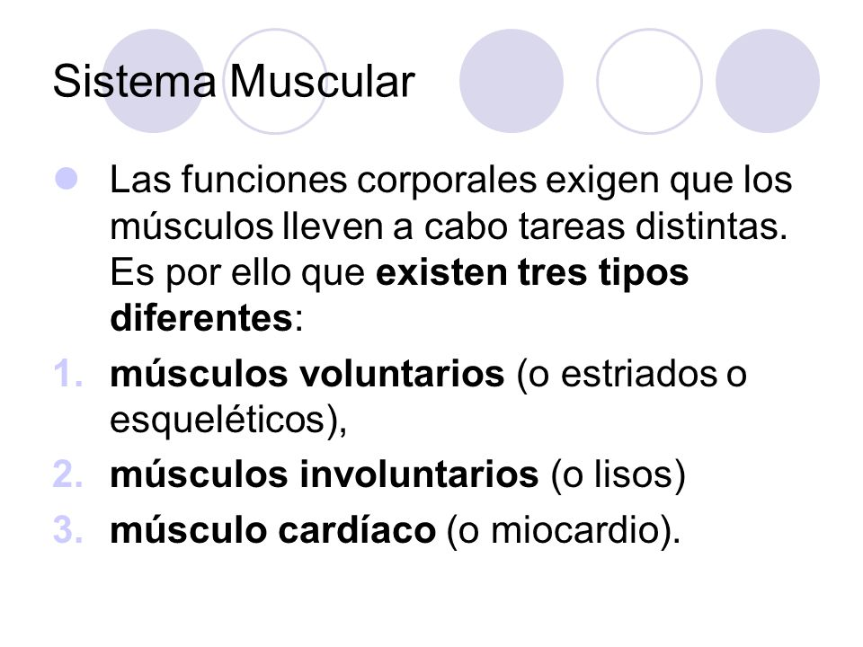 Sistema Muscular Las funciones corporales exigen que los músculos lleven a cabo tareas distintas. Es por ello que existen tres tipos diferentes: