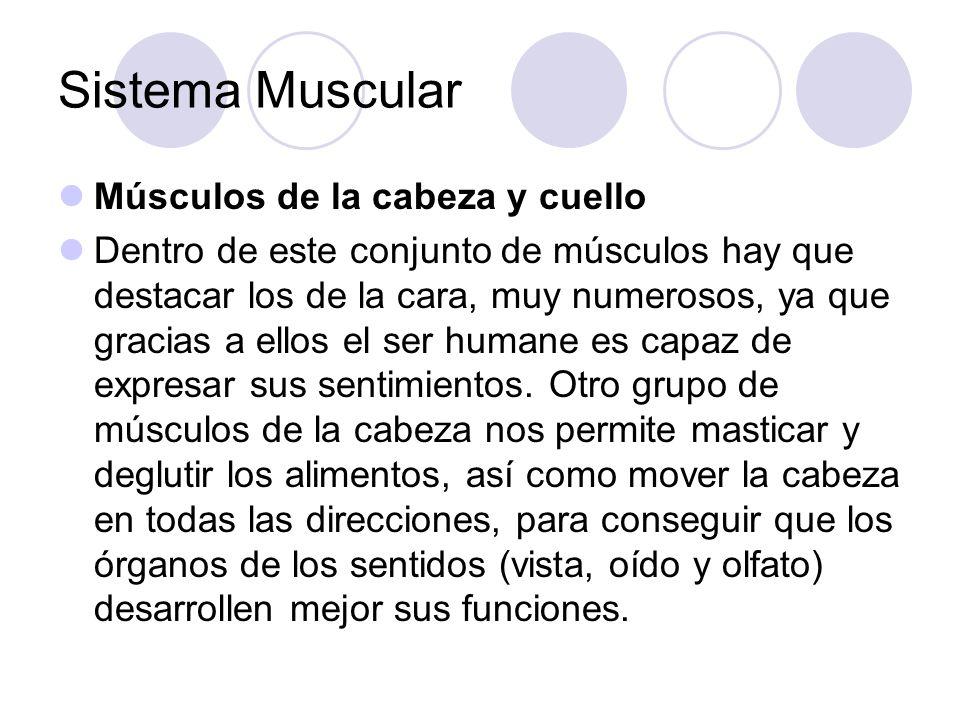 Sistema Muscular Músculos de la cabeza y cuello
