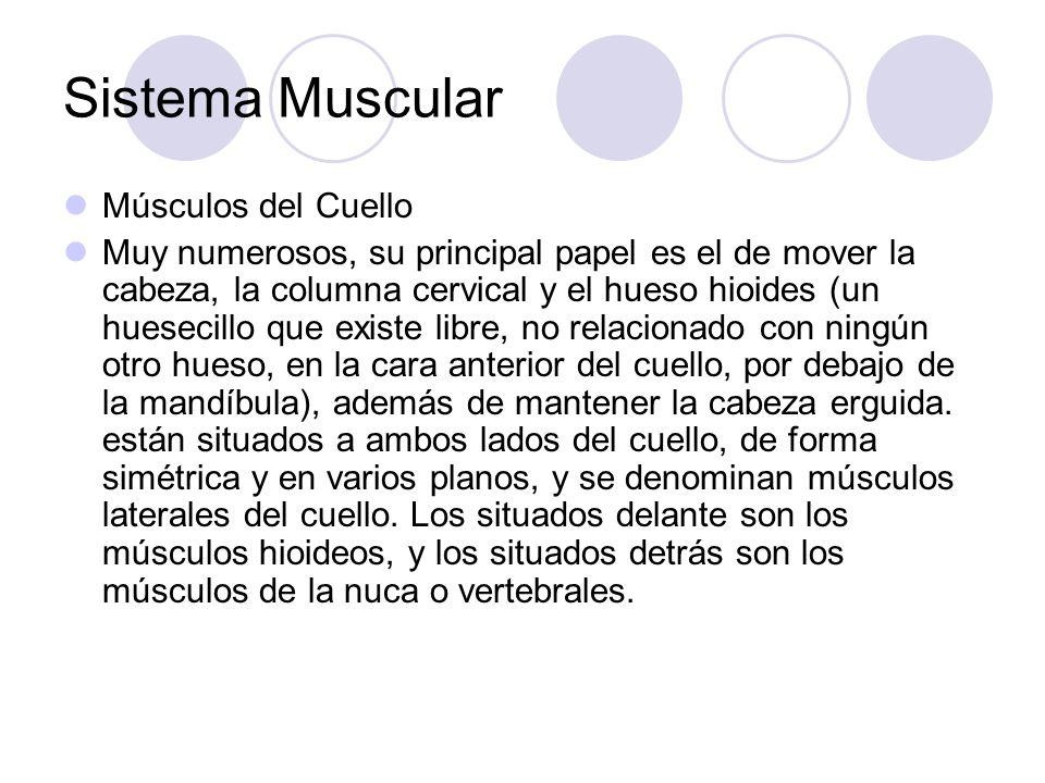 Sistema Muscular Músculos del Cuello