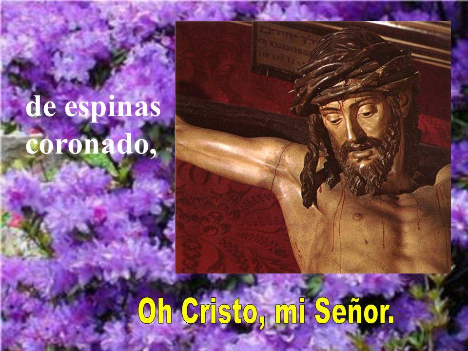 de espinas coronado, Oh Cristo, mi Señor.
