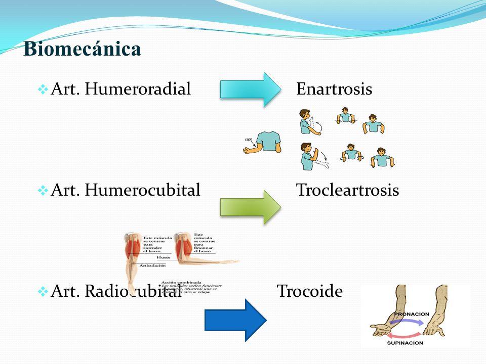 Biomecánica Art. Humeroradial Enartrosis