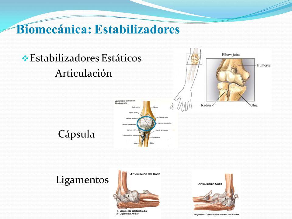 Biomecánica: Estabilizadores