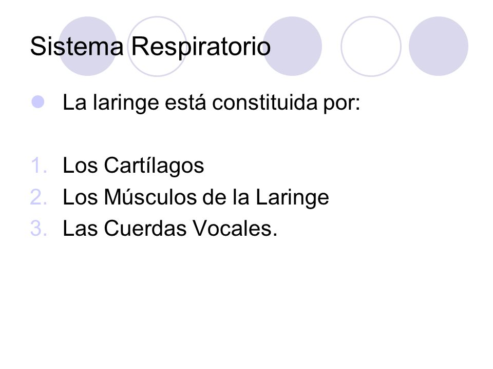 Sistema Respiratorio La laringe está constituida por: Los Cartílagos