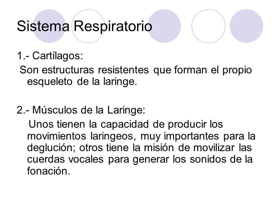 Sistema Respiratorio 1.- Cartílagos: