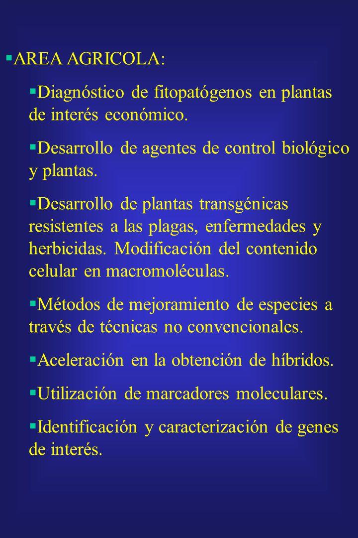 AREA AGRICOLA: Diagnóstico de fitopatógenos en plantas de interés económico. Desarrollo de agentes de control biológico y plantas.